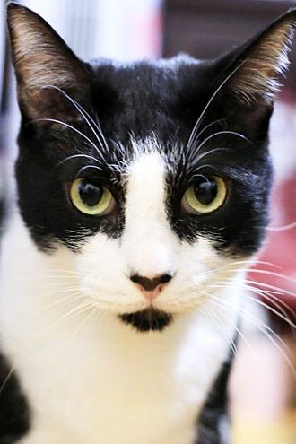 まん丸目玉の猫