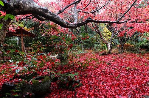 厭離庵の散り紅葉
