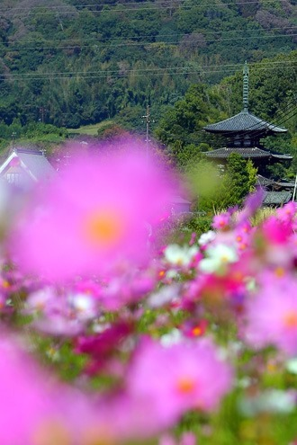 奈良の秋の景色