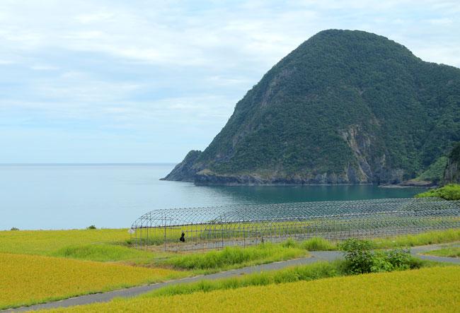 国道178号線から見る日本海