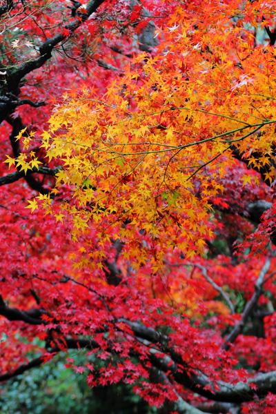 京都嵐山厭離庵