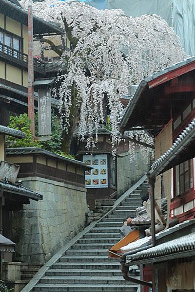 『三年坂の枝垂れ桜』
