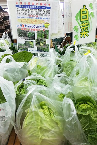 あすかでくるでの野菜白菜