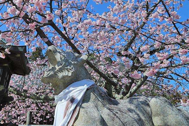 京都法輪寺の寅